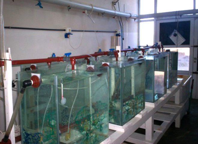 Sala de cultivo de caballitos de mar del CRIAR. Fuente: Luis Portaluppi.