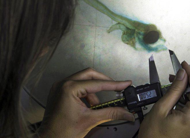 Acuario Larvas. Fuente: INIDEP.