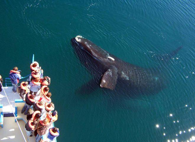 Avistaje de ballenas en Puerto Madryn (Foto: Ángel Velez)