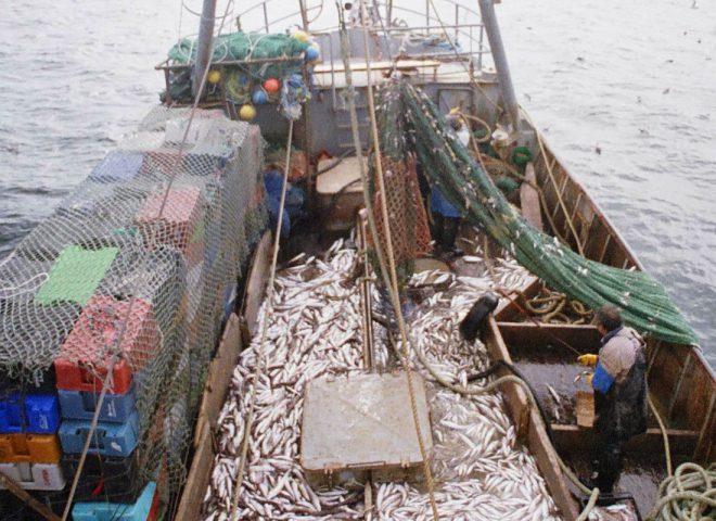 Industria pesquera. Gentileza GONZALEZ ZEVALLOS, Diego.